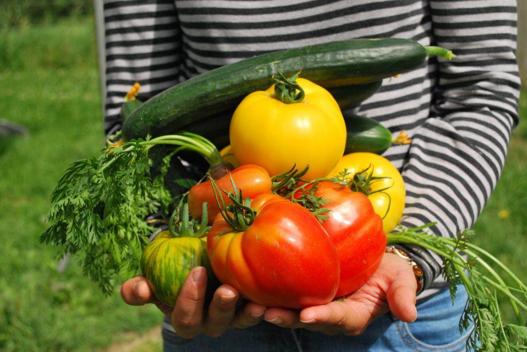 Einzelcoaching Ernährungsberatung